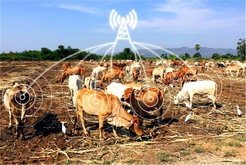 Использование NB-IoT-трекеров в интеллектуальном фермерстве