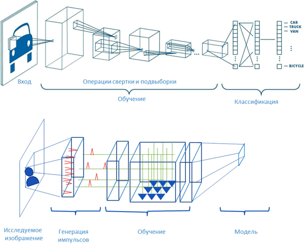 Сравнение импульсной нейронной сети (SNN) и сверточной нейронной сети (CNN) [1]